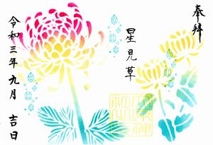 星見草(ほしみぐさ)